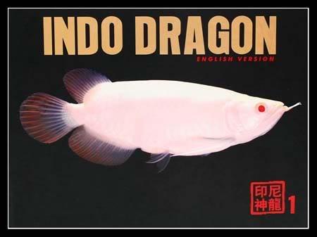 Indo_Dragon.jpg