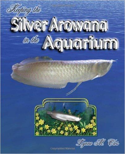 Keeping the Silver Arowana in the Aquarium.jpg
