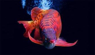 yêu cá cảnh 88