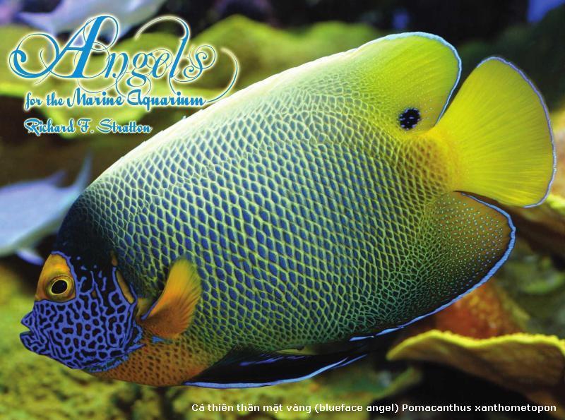 Cá đẹp 1