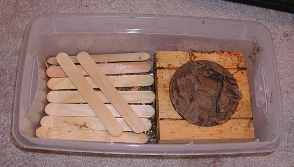 cul_termites07.jpg